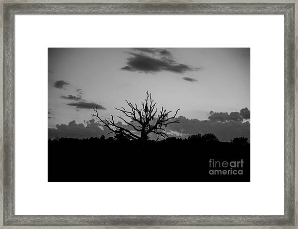 Naked Tree Framed Print by Mina Isaac