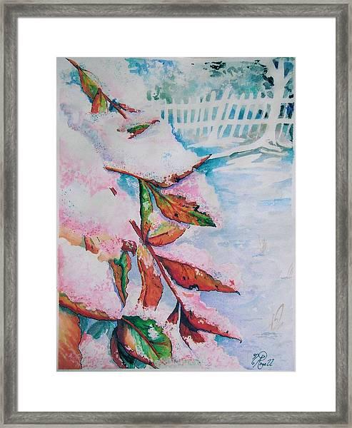 Nandina In Snow Framed Print