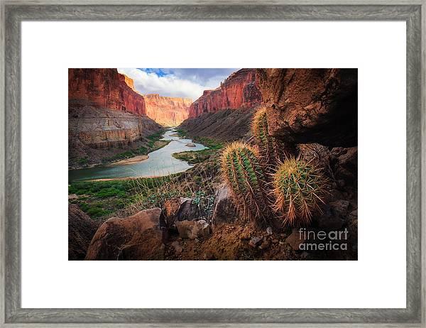 Nankoweap Cactus Framed Print