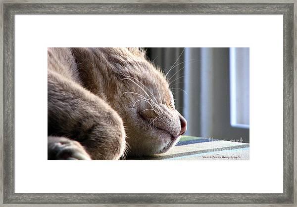 Nap Time Framed Print by Sandra Bauser Digital Art
