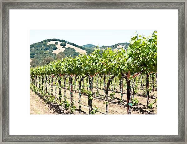 Napa Vineyard Grapes Framed Print