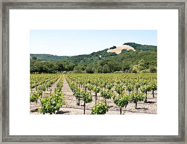 Napa Vineyard With Hills Framed Print