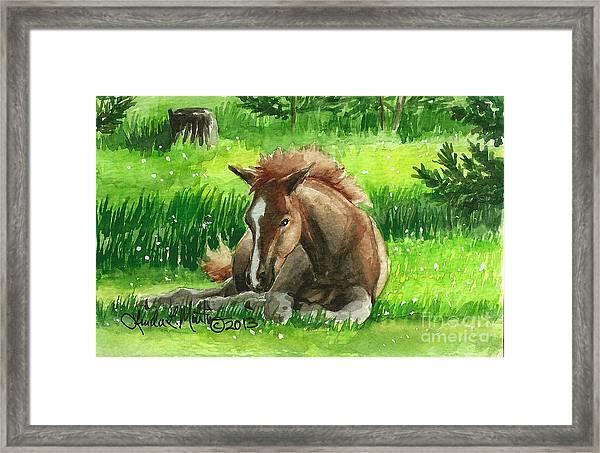 Napping Alberta Wild Foal Framed Print