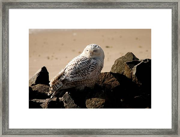 Napping On The Rocks Framed Print