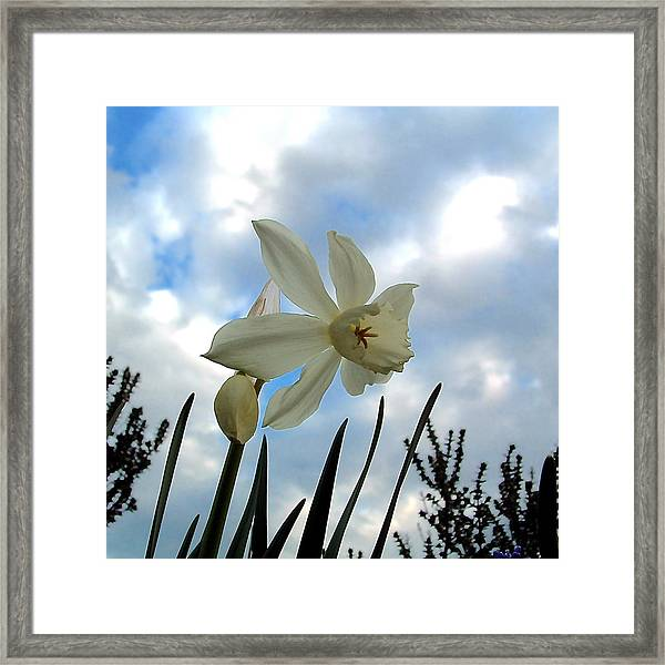 Narcisse Framed Print