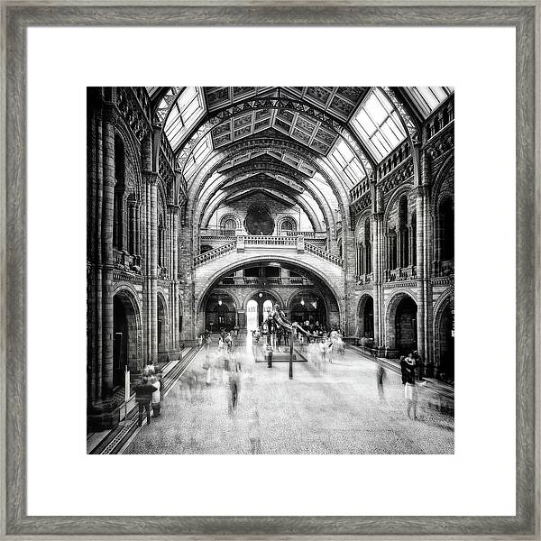 Natural History Museum Of London Framed Print