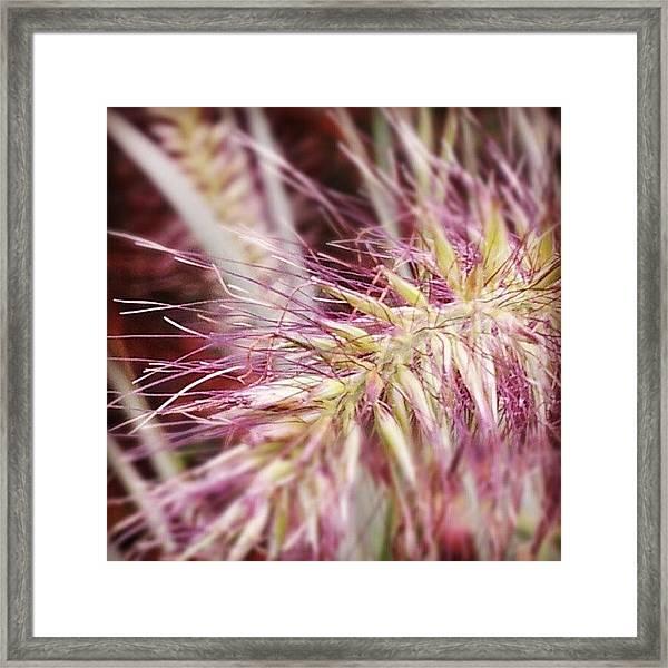Natural Wonders Framed Print