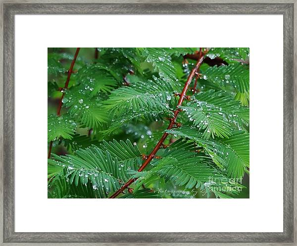 Nature - Beautiful And Simple Framed Print