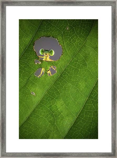 Nature Frame Framed Print