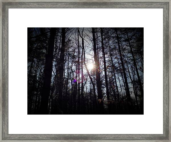 Nature Hike Framed Print