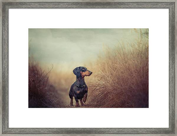 Nature Is Calling And I Must Go.. Framed Print