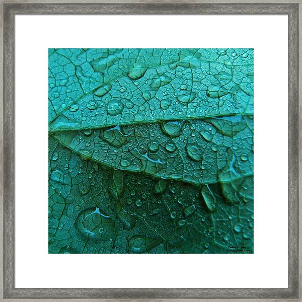 Natures Abstract Framed Print