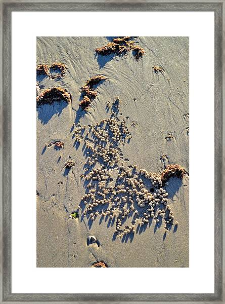 Natures Art - Spot The Sand Bubbler Crab Framed Print