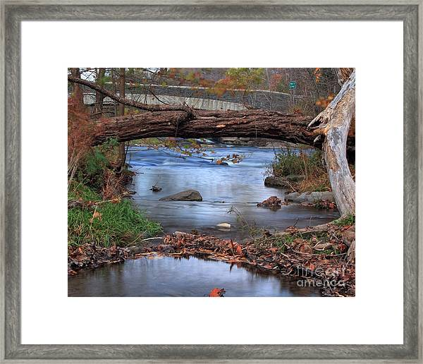 Nature's Bridge Framed Print