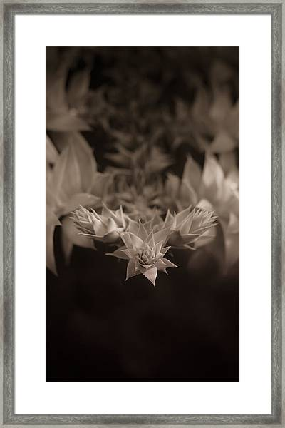 Nature's Directions - Sepia Framed Print