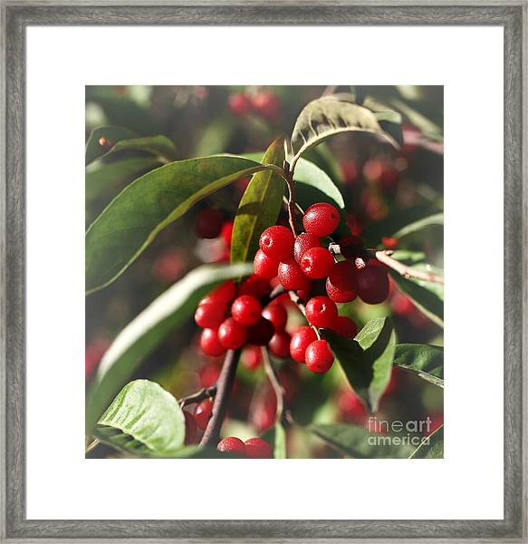 Natures Gift Of Red Berries Framed Print