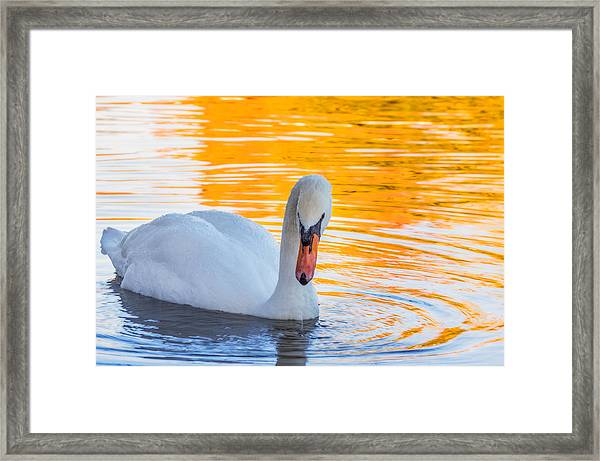 Framed Print featuring the photograph Nature's Grace by Garvin Hunter