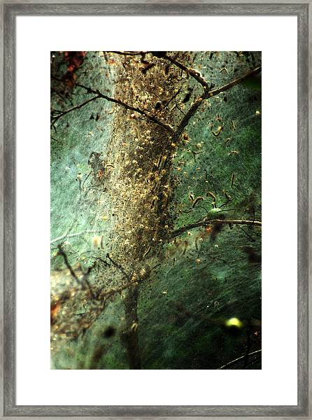 Natures Past Captured In A Web Framed Print