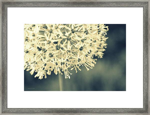 Nature's Popcorn Ball Framed Print