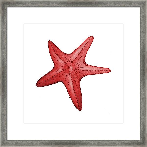 Nautical Red Starfish Framed Print
