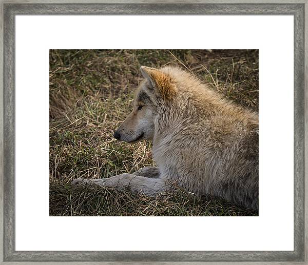 Needed Break Framed Print