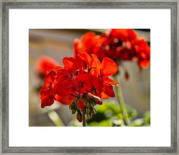 neighbour's flower DB Framed Print