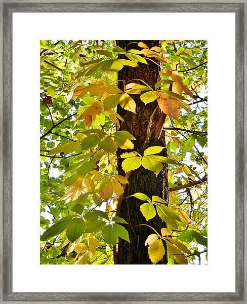 Neon Leaves Framed Print