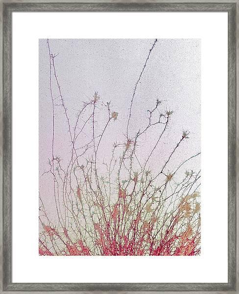 Nerve Cell Culture Framed Print by Steve Gschmeissner