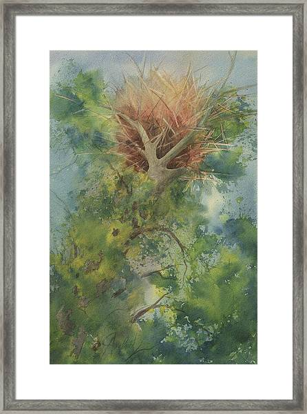 Nest At The Catherdral Pines Framed Print