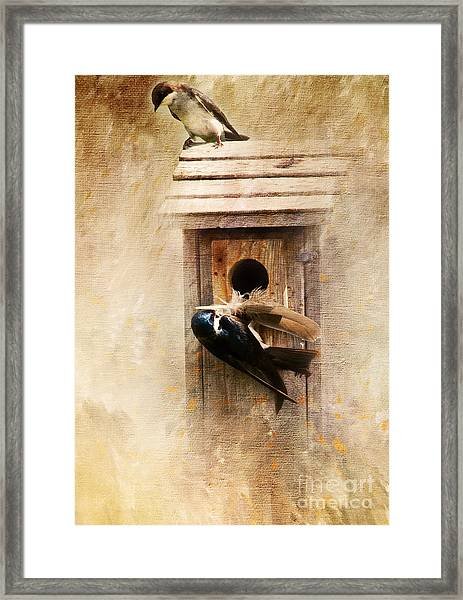Nest Prepping Framed Print