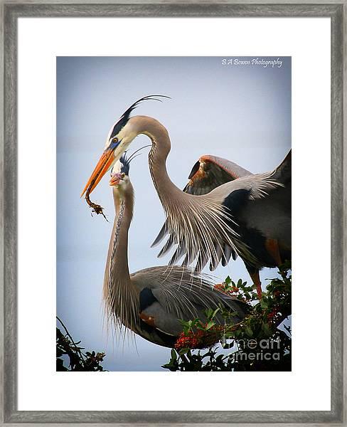 Nestbuilding Framed Print