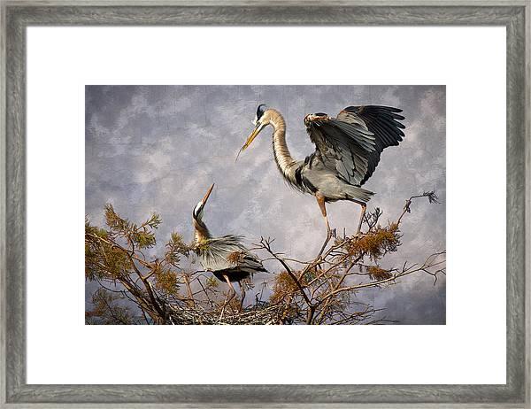 Nesting Time Framed Print