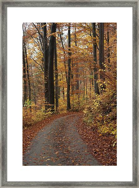 New Autumn Trails Framed Print
