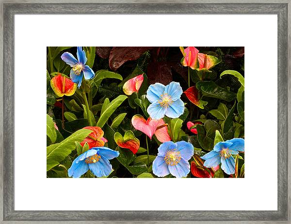 New World And Old World Exotic Flowers Framed Print