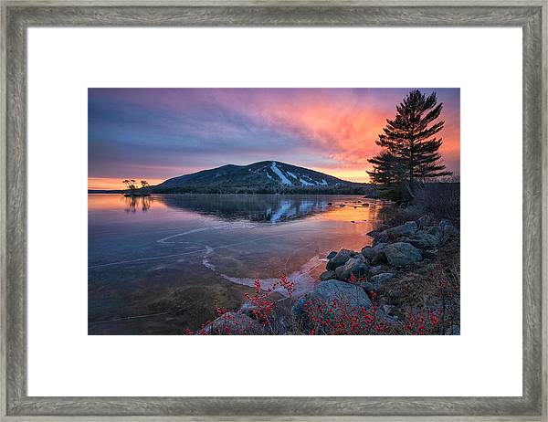 New Years Day Sunset With Berries Framed Print
