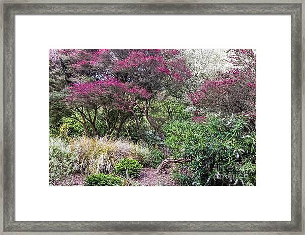 New Zealand Tea Tree II Framed Print