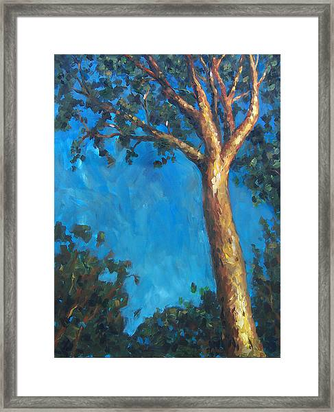 New Zealand Tree Framed Print by Susan Moore