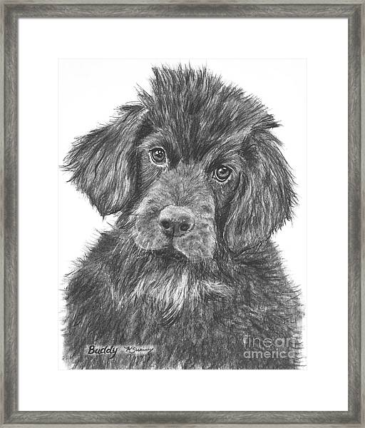 Newfoundland Puppy Sketch Framed Print