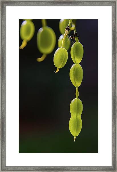 Next Generation Framed Print