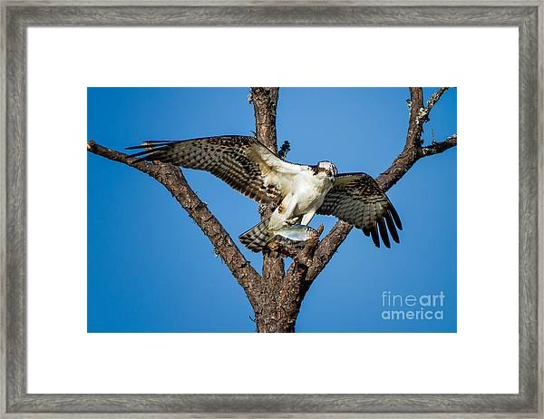 Nice Catch Framed Print