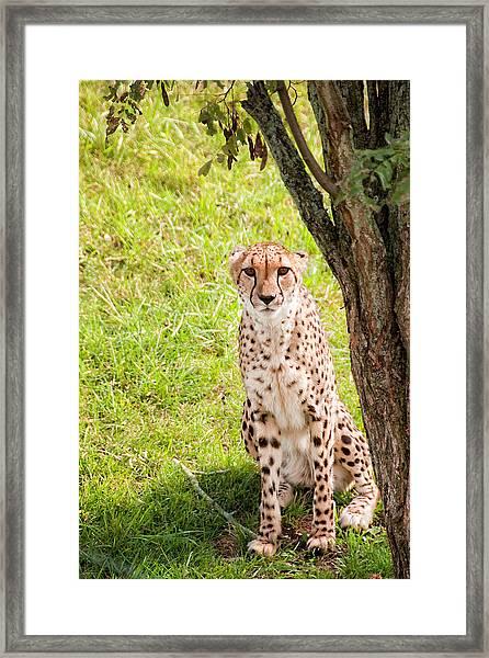 Nice Kitty Framed Print