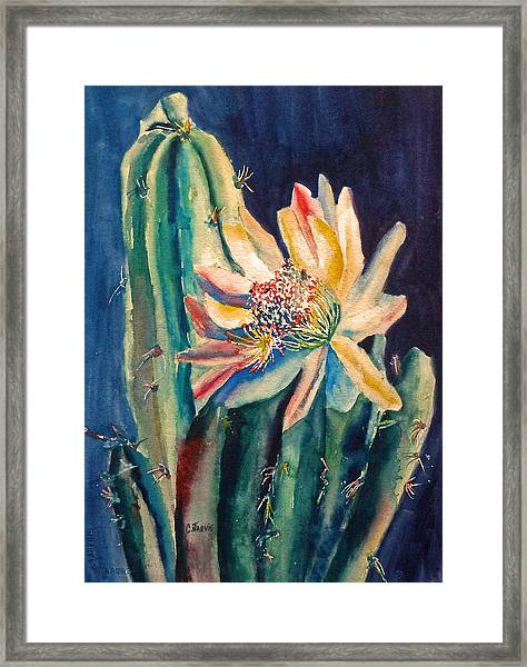 Night Blooming Cactus Framed Print