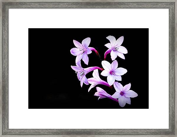 Night Color Framed Print