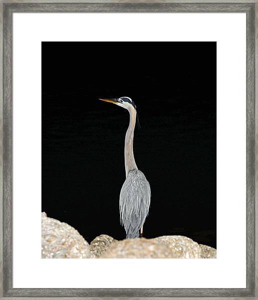 Night Of The Blue Heron 3 Framed Print