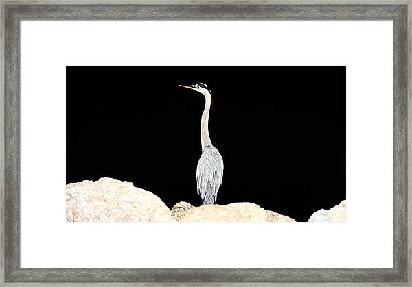 Night Of The Blue Heron  Framed Print