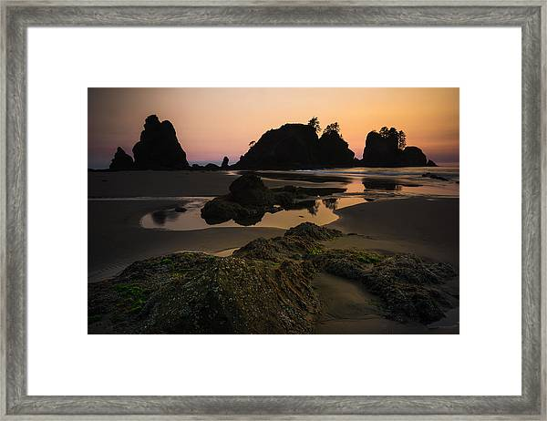 Nightshades Framed Print