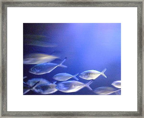 Nine Fishes Swimming Framed Print