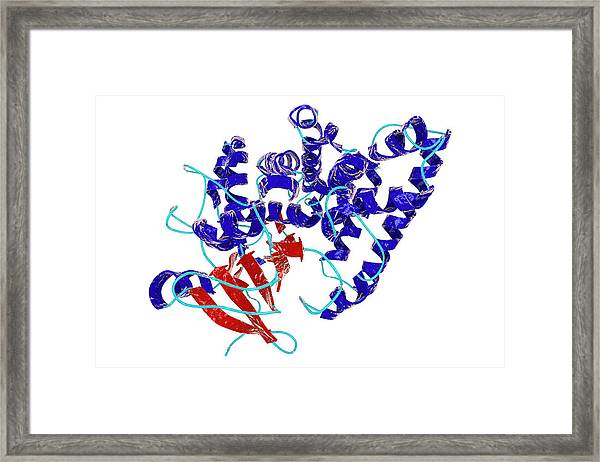 Nitrate Reductase Molecule Framed Print