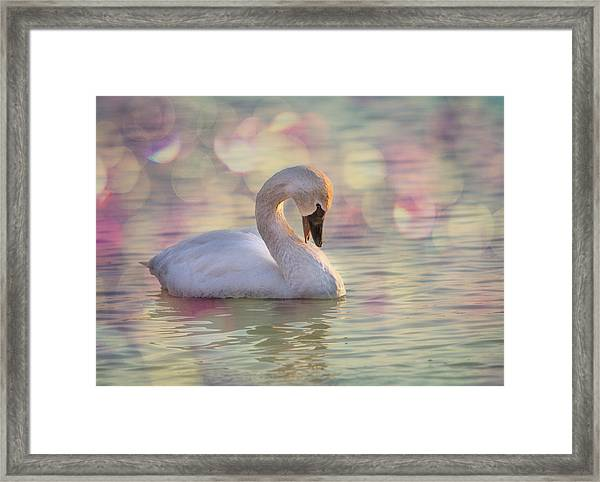 Framed Print featuring the photograph Shy Swan by Patti Deters