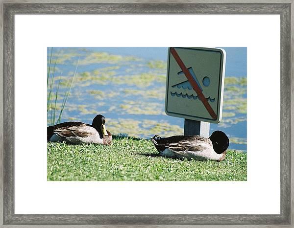 No Swimming Framed Print